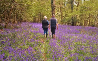 Bluebell Walk raises £1,579.65 for 2 Million Steps!