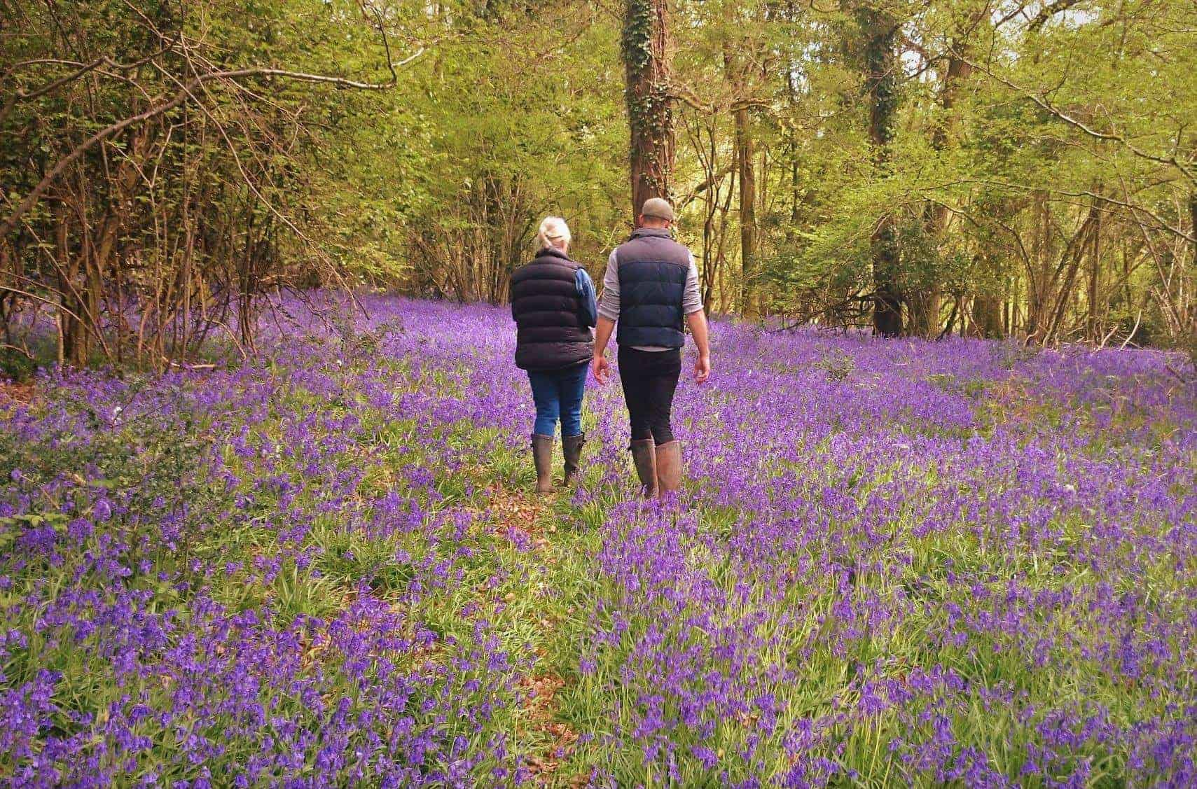 Bluebell Walk April 2019