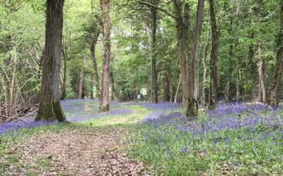 Bluebell Walk raises thousands for The Murray Parish Trust.